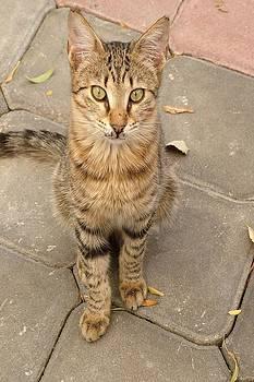 Tracey Harrington-Simpson - Cute Tabby Street Cat