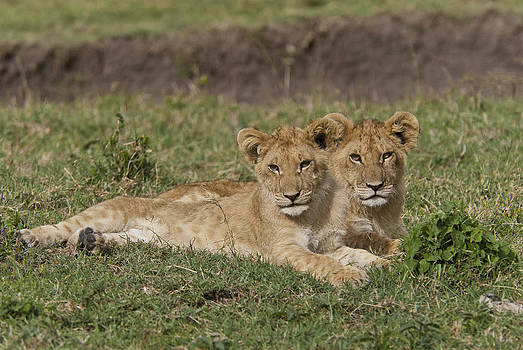 Cute Times Two by Sandy Schepis