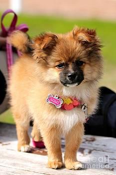 Janice Byer - Cutie Puppy