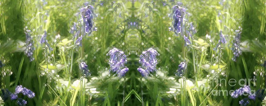 David Hargreaves - Cycle 2 - Spring