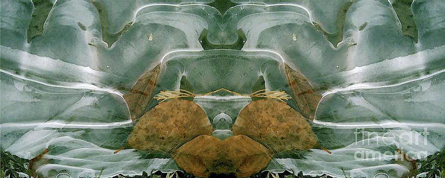 David Hargreaves - Cycle 1 - Winter