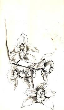 Alfred Ng - cymbidium orchid in ink