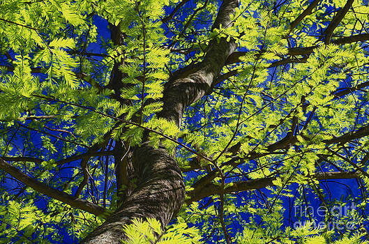 Cypress Blue by Jerry Hart