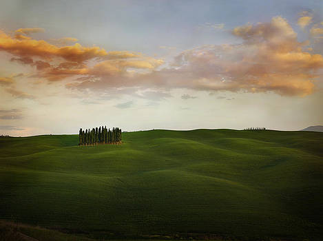 Cypress Grove II Val d'Orcia Tuscany 2071522-124-2444 by Jimmy Williams