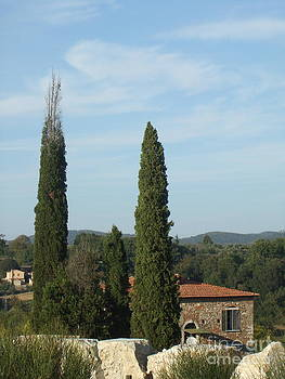 Alessandra Di Noto - Cypress in Rapolano