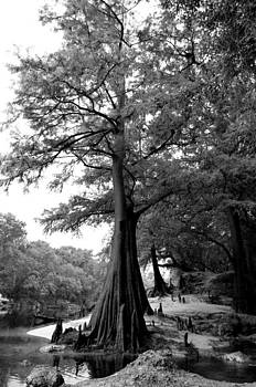 Artists With Autism Inc - Cypress Knees