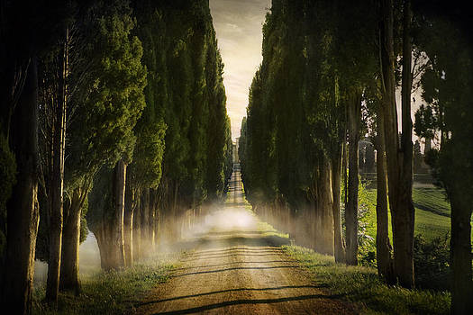 Cypress Lined Road II Siena Tuscany 2071522-130-9577 by Jimmy Williams