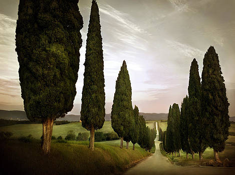 Cypress Lined Road Siena Tuscany 2071522-103-002793 by Jimmy Williams