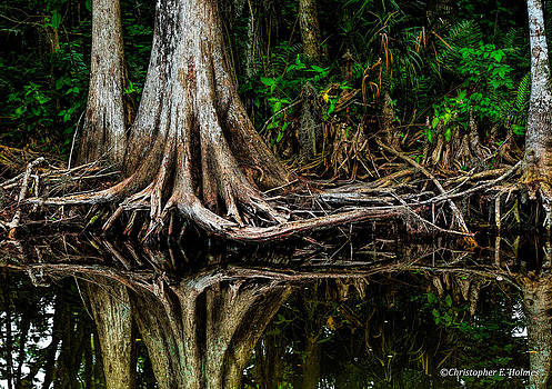 Christopher Holmes - Cypress Roots