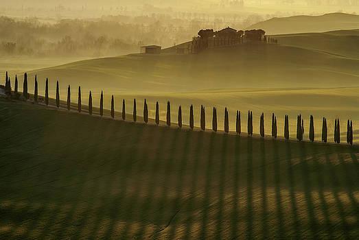 Cypress Shadows by Jarek Pawlak