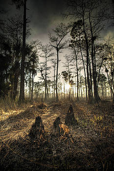 Cypress Stumps And Sunset Fire by Bradley R Youngberg