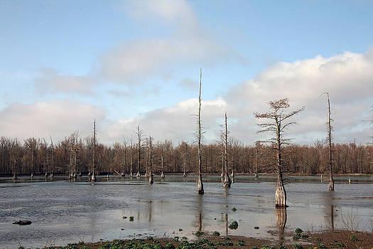 Cypress Swamp by Al Blount