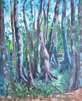 Cypress Swamp by Jan Bennicoff