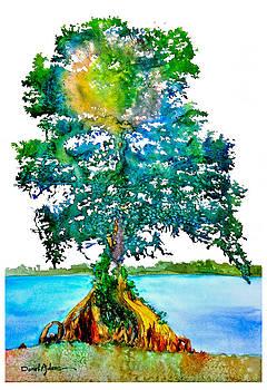 DA107 Cypress Tree Daniel Adams by Daniel Adams