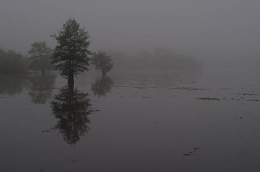 Cypress Trees in Fog by Billy  Griffis Jr