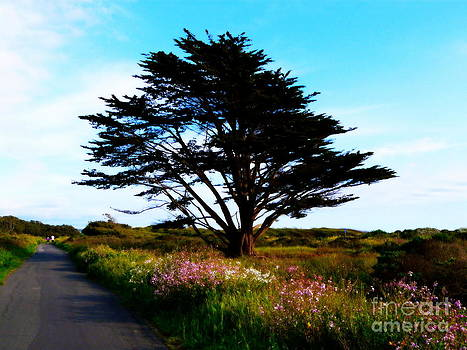 Cypress Walk by Avis  Noelle