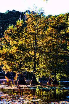 Joe Bledsoe - Cypress Trees at Calion