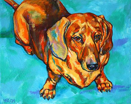 Derrick Higgins - dachshund