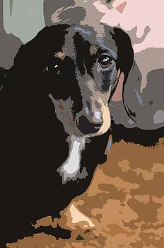 Dachshund Dog Abstract by Olde Time  Mercantile