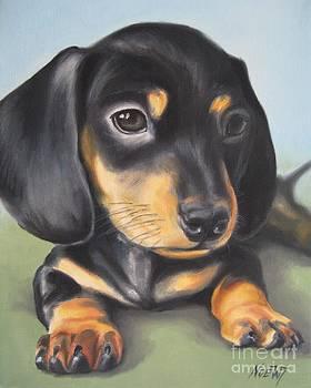 Jindra Noewi - Dachshund Puppy
