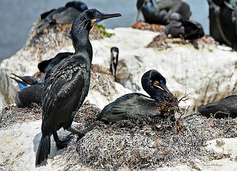 Dad and Mom Building the Best Nest by Susan Wiedmann