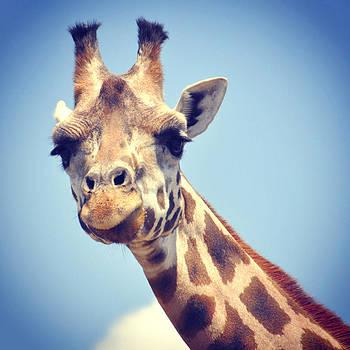 Dad's Giraffe by Tanis Crooks