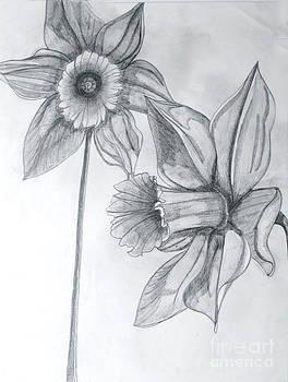 Daffodil by Cecilia Stevens