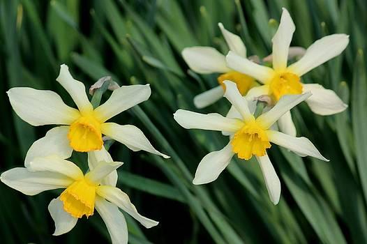 Rosanne Jordan - Daffodil Pinwheels