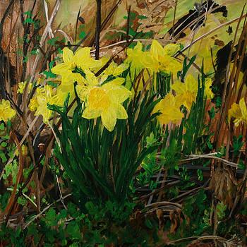 Daffodil Thrill by Julianne Hunter