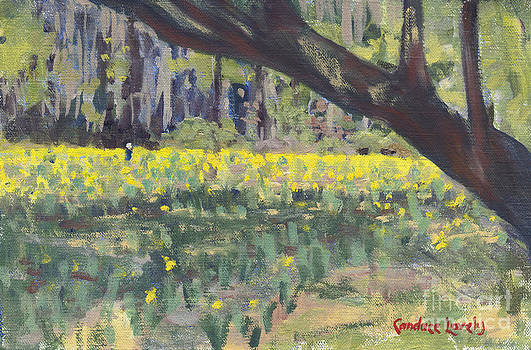 Candace Lovely - Daffodil Tree