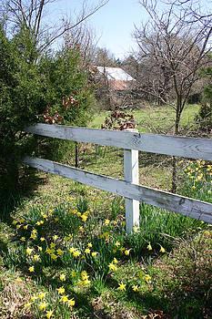 Nina Fosdick - Daffodils along a Fence