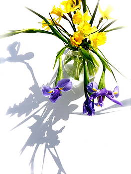 Daffodils and Iris by Tracy Male