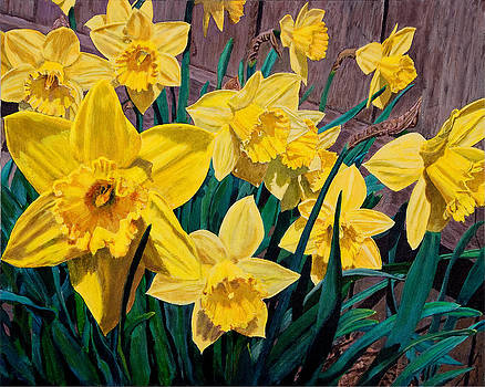 Daffodils by Charlie Harris