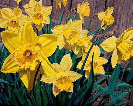 Charlie Harris - Daffodils