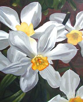 Daffodils by Donna Schaffer