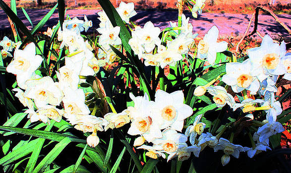 Joe Bledsoe - Daffodils