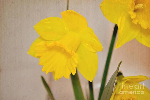 Daffodils by Nadeesha Jayamanne