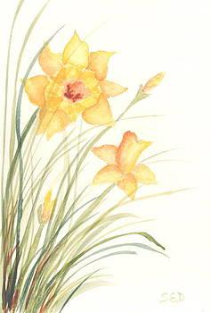 Daffodils by Sara Davenport