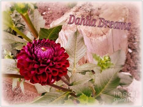 Dahlia Dreams by Cindy McClung
