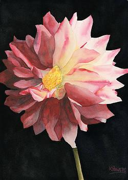 Ken Powers - Dahlia