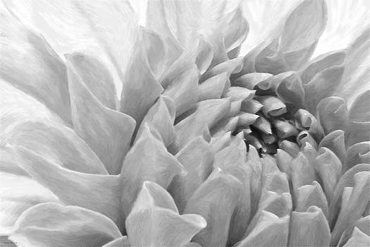 Sandra Foster - Dahlia Petals - Digital Pastel Art Work