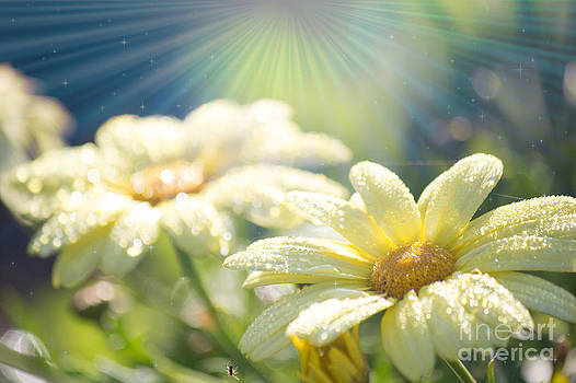Alanna DPhoto - Daily Burst of Sunshine