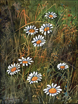 Anthony Forster - Daisies in Long Grass