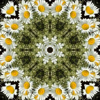 Valerie Kirkwood - Daisies Kaleidoscope