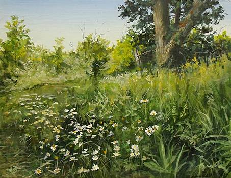 Daisies by William Brody
