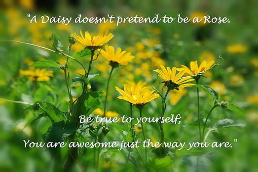Daisy 2 by Francie Davis
