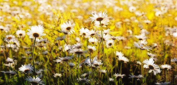 Daisy Daisy Give Me Your Answer Do by Jerry Ranch