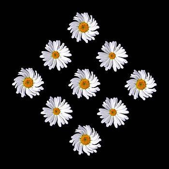 Daisy Diamond by James Hammen