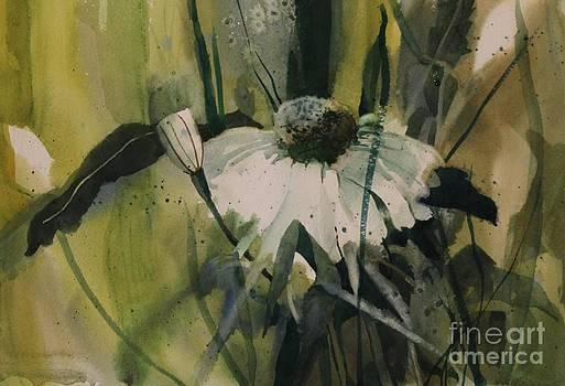 Daisy by Elizabeth Carr