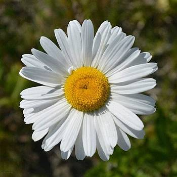 Eve Tamminen - Daisy